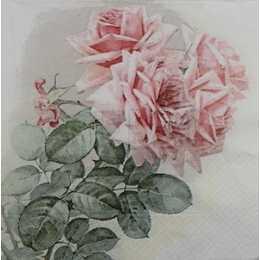 Galho com Folhas e Rosas no Fundo Branco F1023