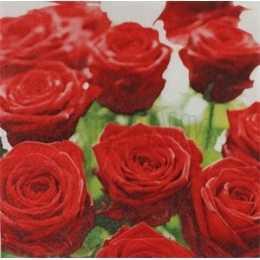 Rosas Vermelhas no Fundo Branco (385)