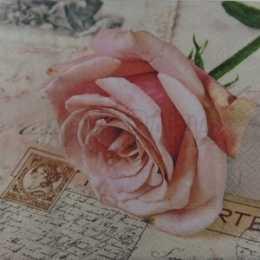 Rosa cor de Rosa  sobre Carta (709)