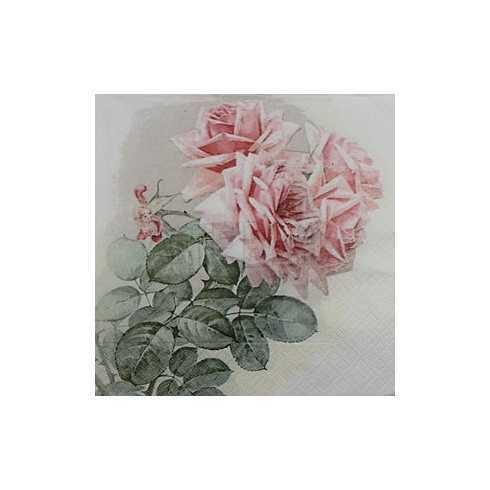 Galho com Folhas e Rosas no Fundo Branco
